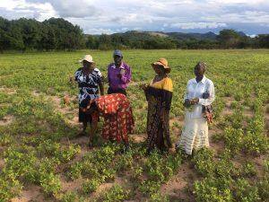 Peace begets community development